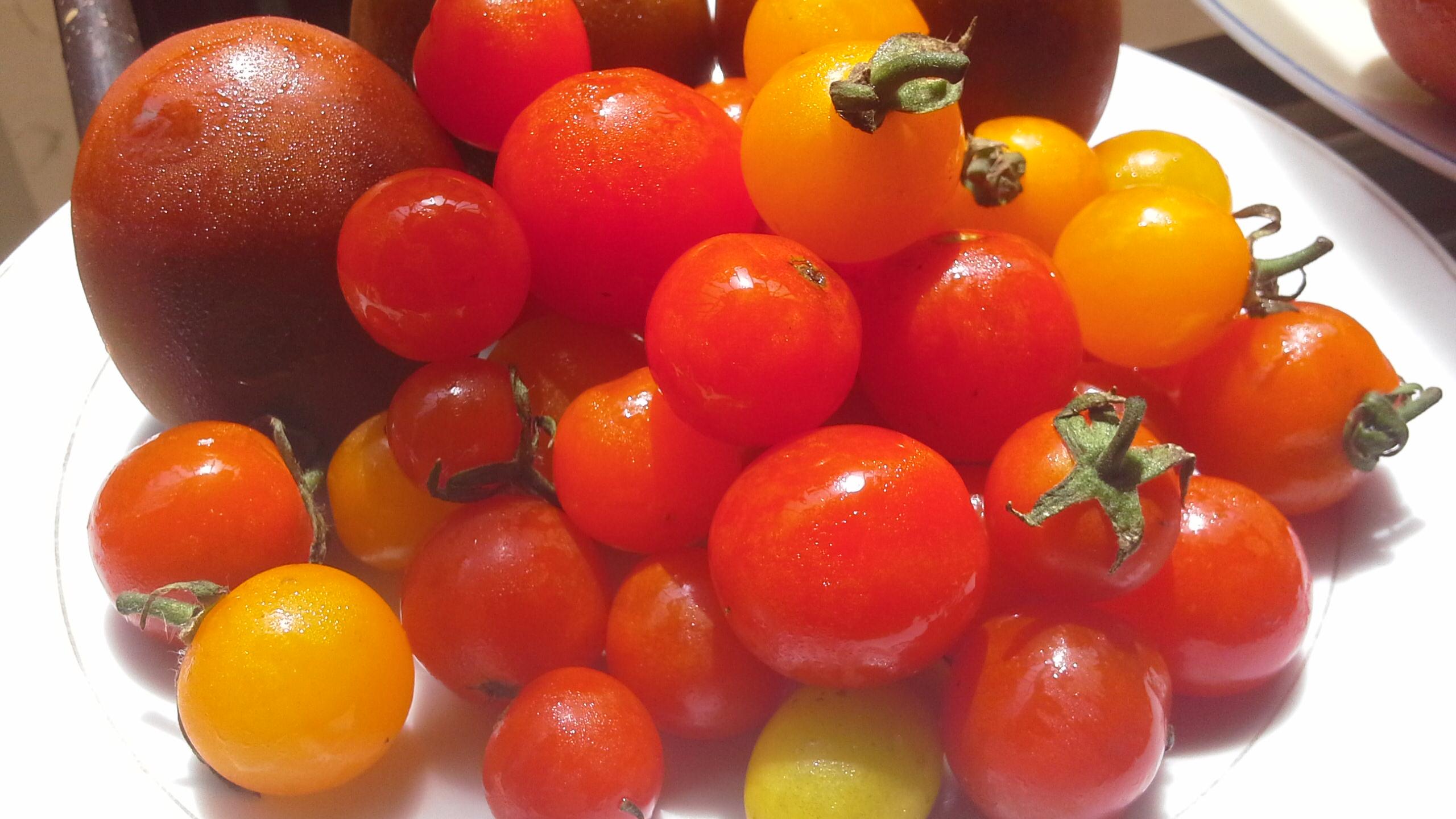 19+ tomato – Design Your Lifestyle. Fotos