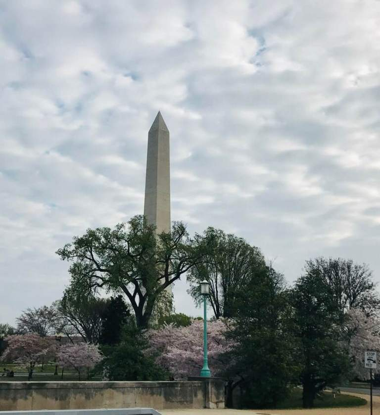 Cherry blossoms in front of the Washington Monument.